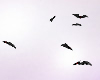 [E]MH Draculaura Bats