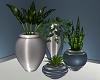 Elegant Garden PLants