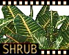 Shrub ground plants