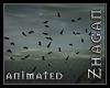 [Z] HI  Birds