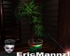 [CPI]tropical plant