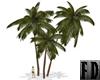 3 Palms Resizable Darker