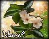 *LL* Flower enhancer 3