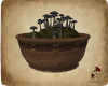 D. SR Mushroom Pot V2