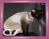 GS Siamese Cat