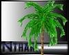 !N Canarian Palm