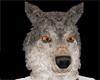 (ASP) Wolf Action/ sound