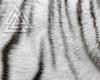 △ Tail Cat  W/B
