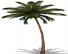 Animated Palm Tree