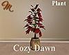 [M] Cozy Dawn Plant