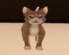 s~n~d animated pet cat b