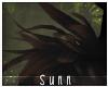 S: Lykoi | Shoulder