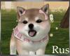 Rus: Shiba Pup Girl