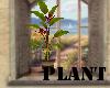 (A)Plant~BirdofParadise