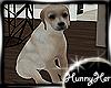 Family Pet Puppy