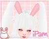 p. bunny nurse ears