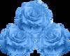 Blue Roses -1L