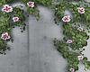 Ivy Flower Vines