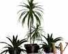 3 Plants