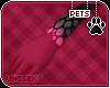[Pets] Ziro | paws v3