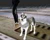 !Em Johnnas Wolf-Pet