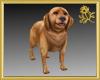Golden Retriever Pet