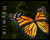 :Monarch Butterfly