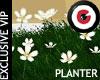 White flowers planter