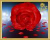 Romantic Rose Room