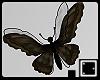 ` Nightfly v.1