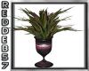 Purple Fuchsia Plant