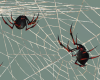 Spiders And Webs Add