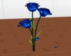 Blue Misty Rose