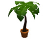 Animated Potted Palm