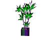 Joker Wild Plant V1