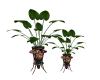 Rust Black Plant #2