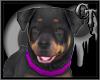 Rottweiler Pet W/ Sounds