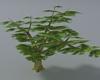 (ED1)Trees-14
