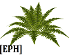 [EPH] Fern Natural