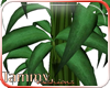 !TF TGND Bamboo Plant