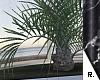 e Palm 1