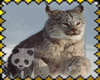 Save the Linx Stamp