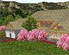 Cherry Blossom Ranch