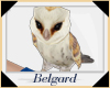 Bf Cute Barn Owl
