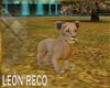 c Lion Baby  Animated