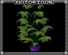 Toxic Peacock Planter