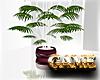 CLASSIC PLANT