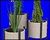 +Roof Club Plant+