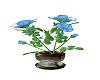 Elegant Blue Roses