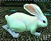 Pet the Rabbit Animated
